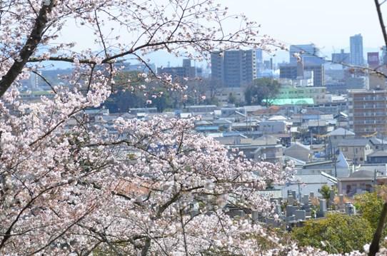 桜と街1829.jpg