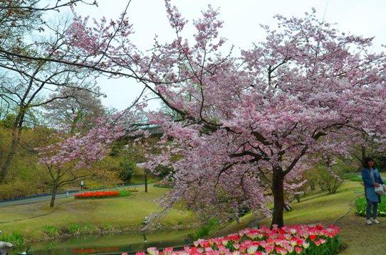桜風景・花回廊0376.jpg