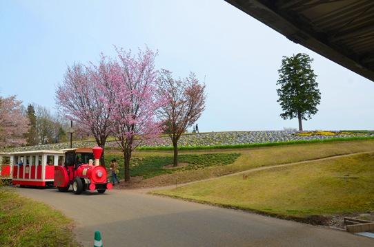 桜風景・花回廊0432.jpg