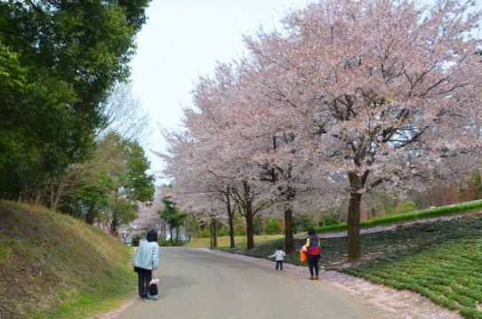 桜風景・花回廊0435.jpg