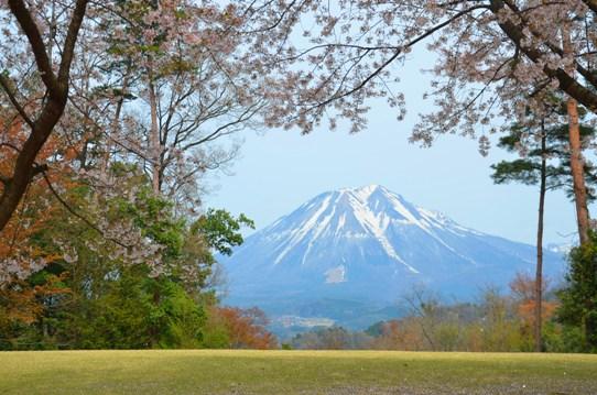 桜風景・花回廊0604.jpg