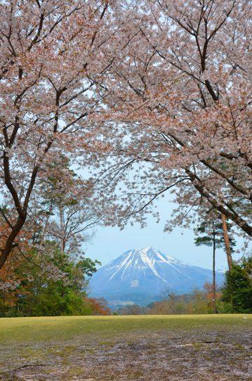 桜風景・花回廊0607.jpg