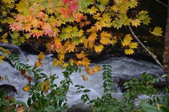森林公園6575.jpg