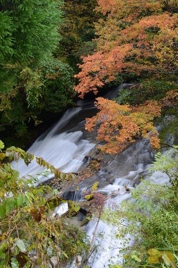 森林公園6590.jpg