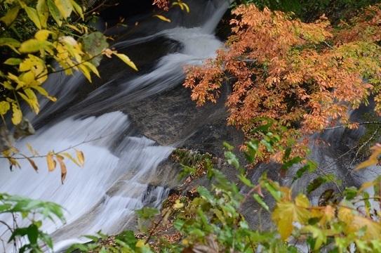 森林公園6593.jpg