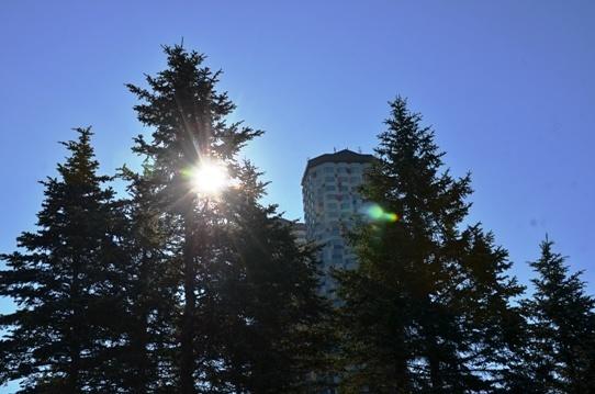 樹間の朝陽4822.jpg