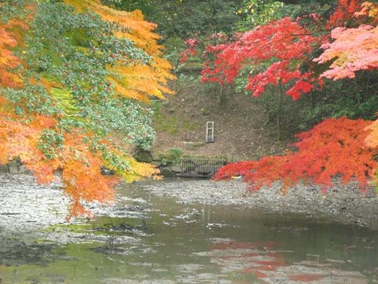 水辺の紅葉1050372.jpg