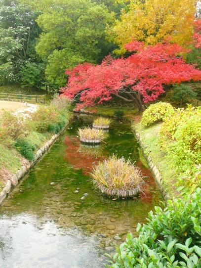 水辺の紅葉1050406.jpg