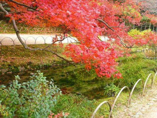 水辺の紅葉1050415.jpg