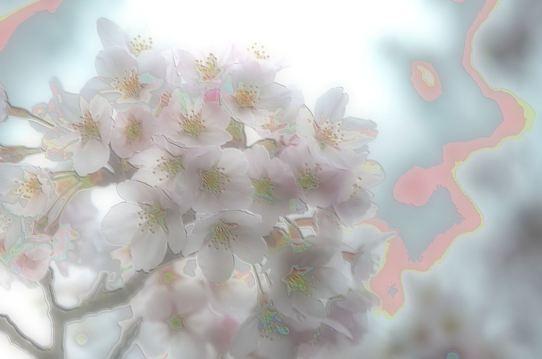 深山公園の櫻4・6386~5.jpg