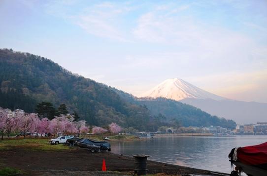 湖畔の桜1263.jpg
