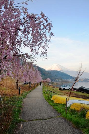 湖畔の桜1266.jpg