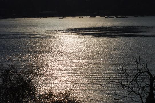湖面の輝き0292.jpg