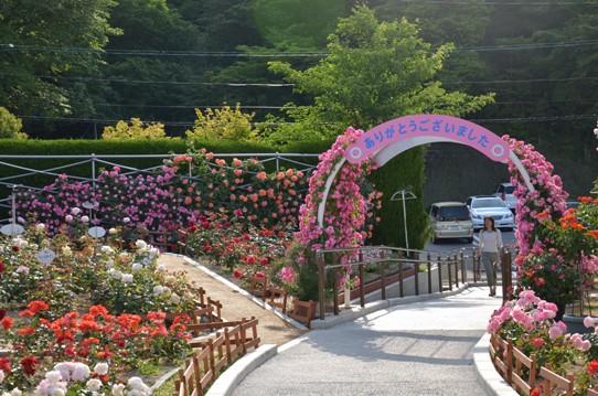 福山SA上りのバラ園2031.jpg