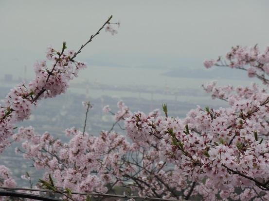 種松山の桜1030011.jpg