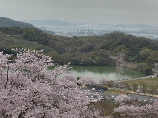 種松山の桜1030023.jpg