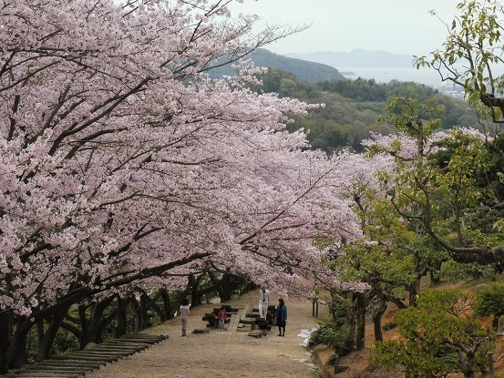種松山の桜1030027.jpg
