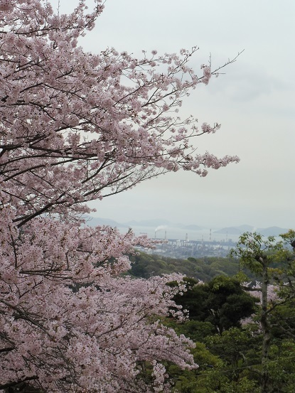 種松山の桜1030028.jpg