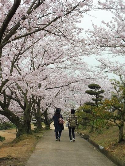 種松山の桜1210031.jpg