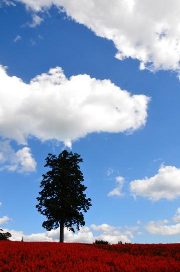 空に聳える木7517.jpg