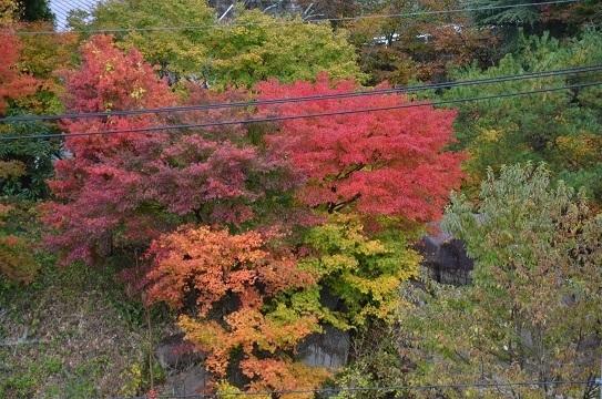 紅葉風景6606.jpg