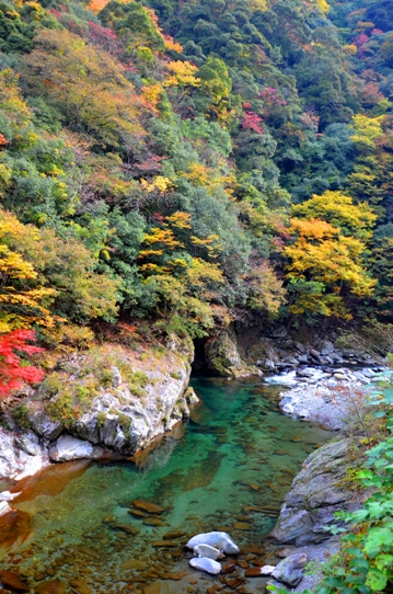 美しき日本の自然7855.jpg