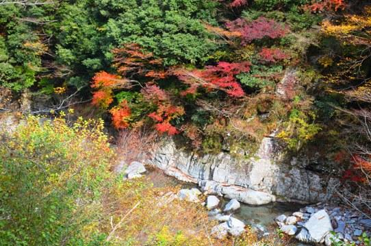 美しき日本の自然7870.jpg
