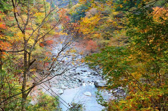 美しき日本の自然7885.jpg