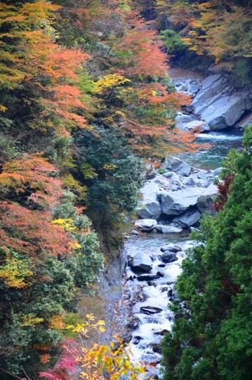 美しき日本の自然7930.jpg