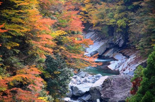 美しき日本の自然7936.jpg