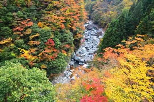 美しき日本の自然7950.jpg