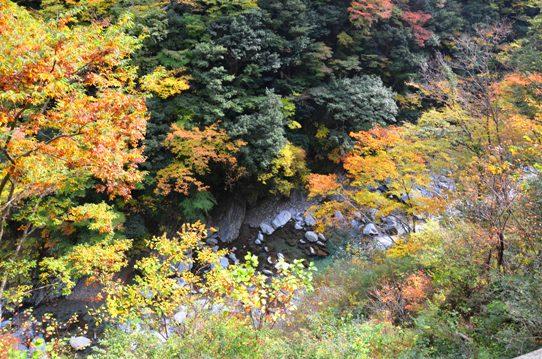 美しき日本の自然7988.jpg