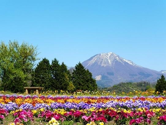 花と大山1390293.jpg