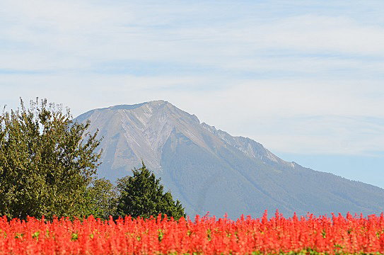 花と大山6035.jpg