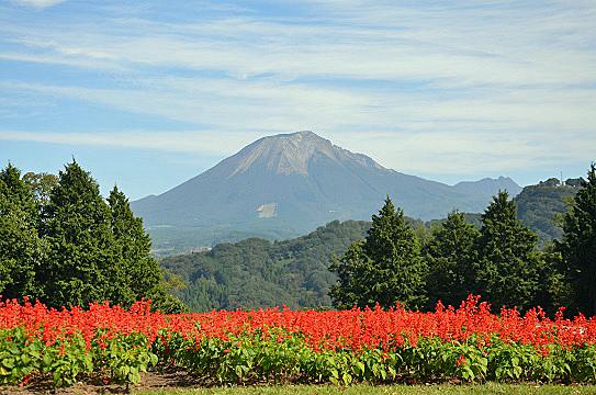 花と大山6041.jpg