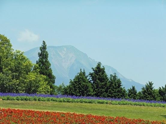 花と大山とフラワードーム1100015.jpg