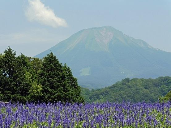花と大山とフラワードーム1100016.jpg