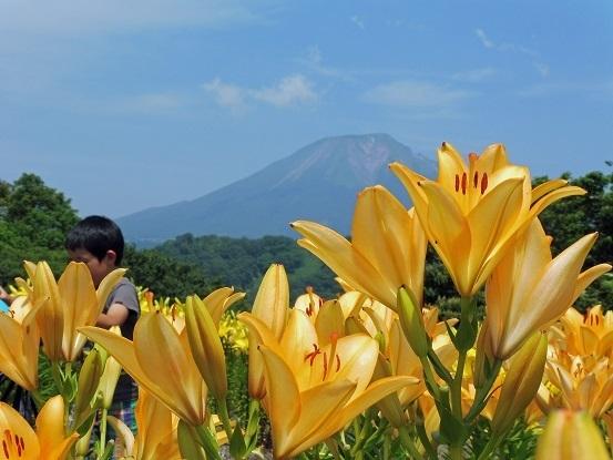 花と大山とフラワードーム1100122.jpg