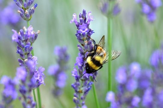 花と虫9303.jpg
