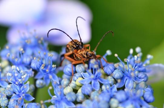 花と虫9342.jpg
