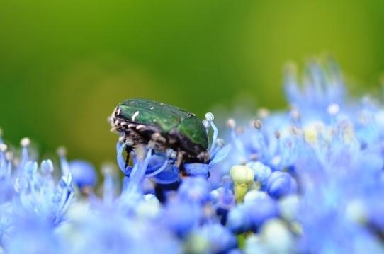 花と虫9344.jpg
