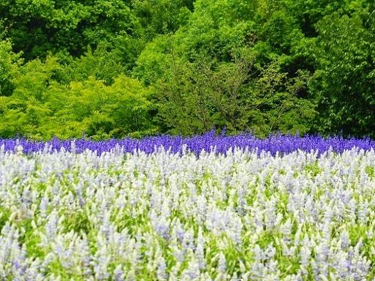 花の丘1270063.jpg