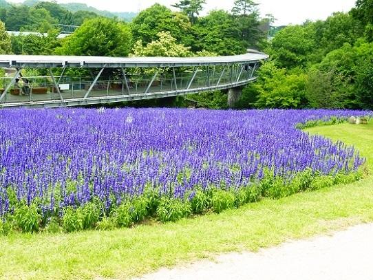 花の丘1270065.jpg