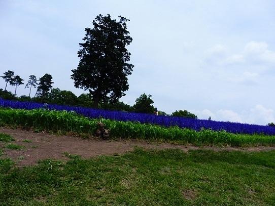 花の丘1270070.jpg