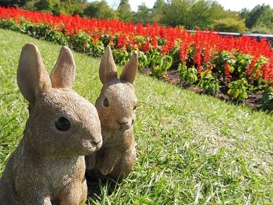花の丘のサルビア1300393.jpg