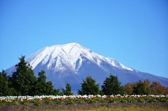 花の丘の大山4995.jpg