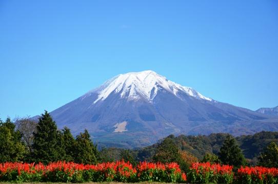 花の丘の大山5005.jpg
