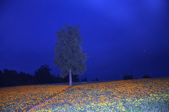花の丘・夜9598.jpg