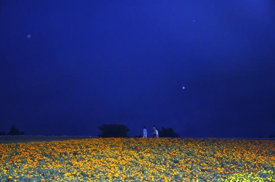 花の丘・夜9601.jpg