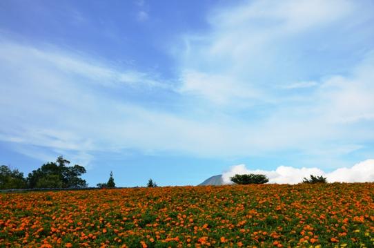 花の丘・昼9560.jpg